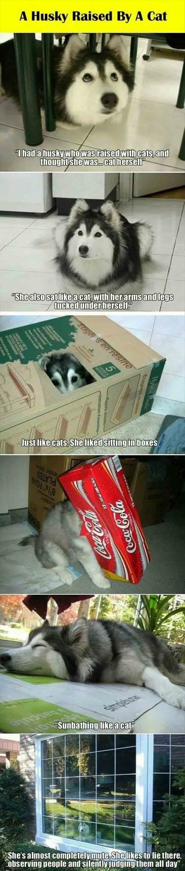 Fun box funny picture funny pic pic of fun funny image - Funny Pictures About Dog Raised By Cats Oh And Cool Pics About Dog Raised By Cats Also Dog Raised By Cats Photos