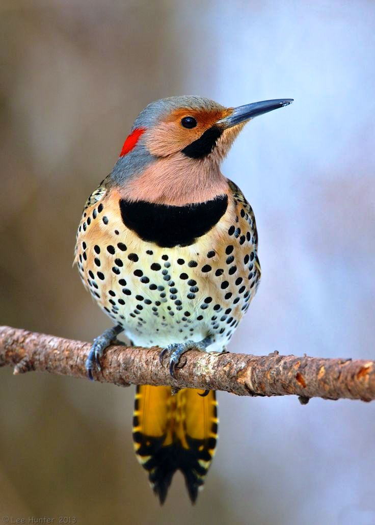 ",, BEAUTIFUL "" | Birds, Colorful birds, Wild birds"