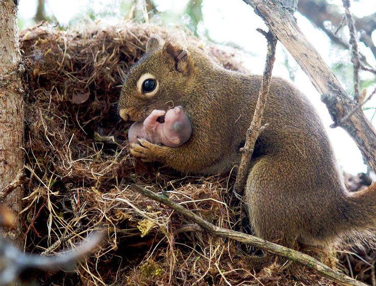 Opieka nad noworodkiem