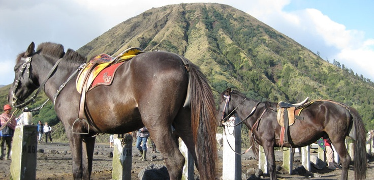 Ponies take visitors across the sand sea to the bottom of the steep stairs that lead the edge of Mt.Bromo's crater rim. Photo by Andika Saputra - www.indonesia.travel