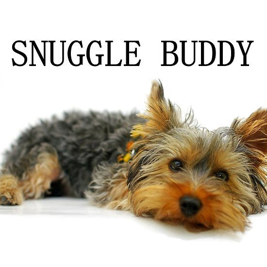 Yorkshire Terrier Snuggle Buddy Yorkshire Terrier Yorkshire