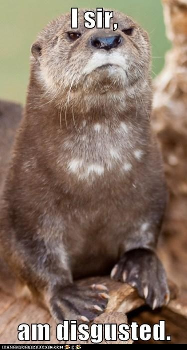 I'm otterly disgusted.... (first grumpy otter I've ever seen!)