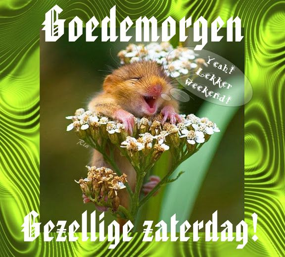 Zaterdag - Ria Hoogeland - Picasa Web Albums