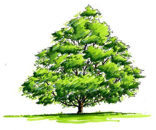 Poser votre arbre et marque l 39 ombre au sol dessin techniques dessin arbre comment - Arbre dessiner ...