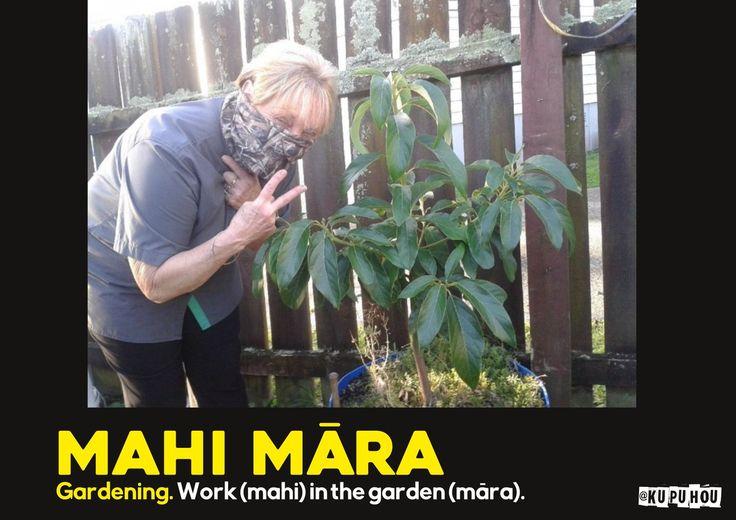 Mahi māra - gardening. Work (mahi) in the garden (māra).