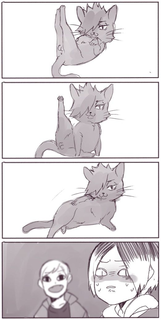 "#Haikyuu cat!Kuroo, Kenma & Lev - Kuroo is like: ""Draw me like one of your french girls."" x'D (Twitter: mookie000)"