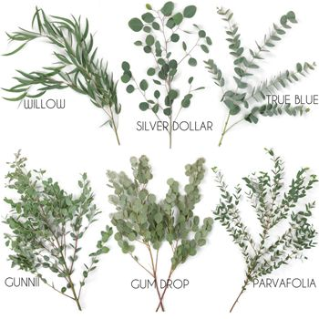 FiftyFlowers.com - Choose Your Own Eucalyptus Greenery Pack