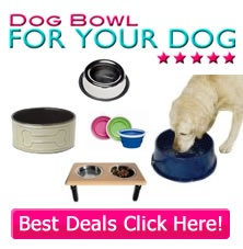 Your special #dog needs just the right #bowl to suit his or her unique needs. http://www.dogbowlforyourdog.com/