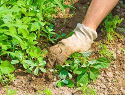 Top Strategies for Killing Weeds