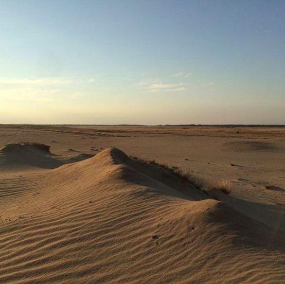 Dich fasziniert die Sahara, aber sie ist dir zu weit weg? Dann besuche doch Deutschlands größte Wüste –  die Lieberoser Wüste mitten in Brandenburg.