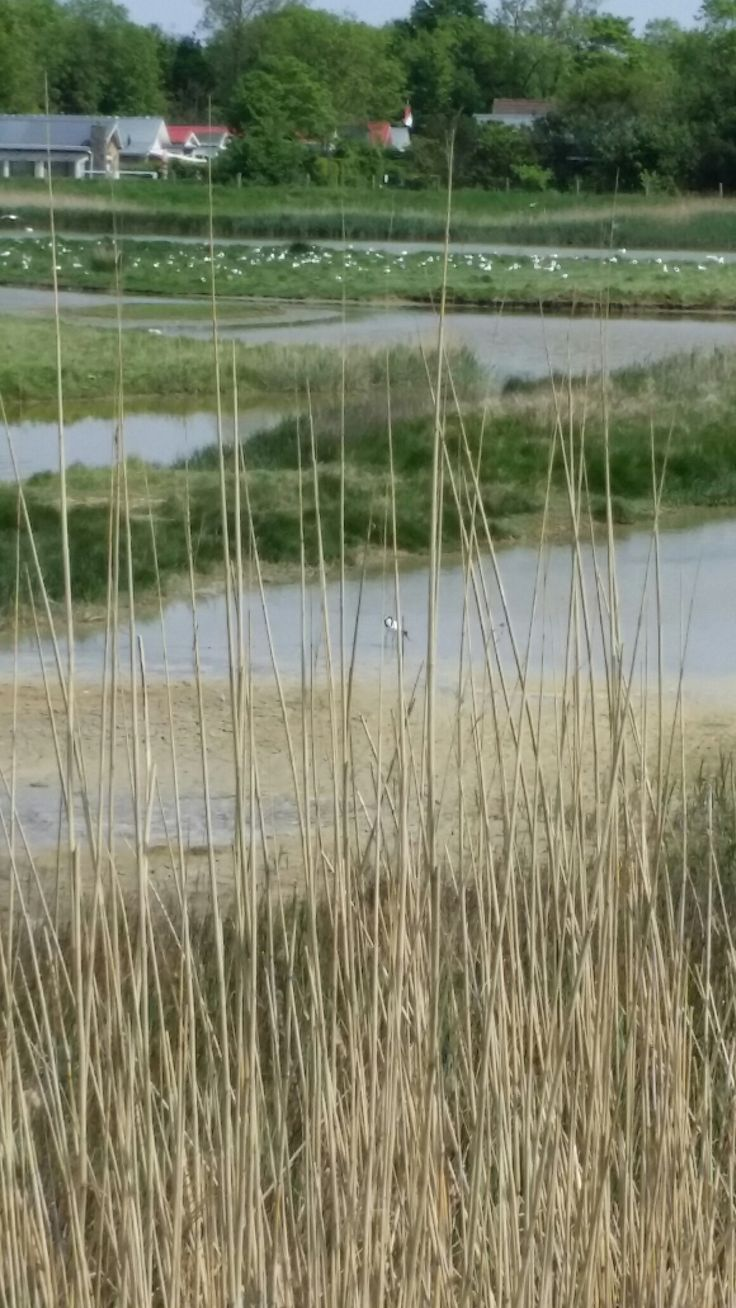vogelgebied achter de Schelde