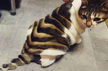 14 Cats Who Really Regret Their Haircuts