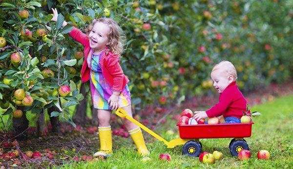 Freizeitaktivitäten: Kirschen, Birnen, Äpfel pflücken