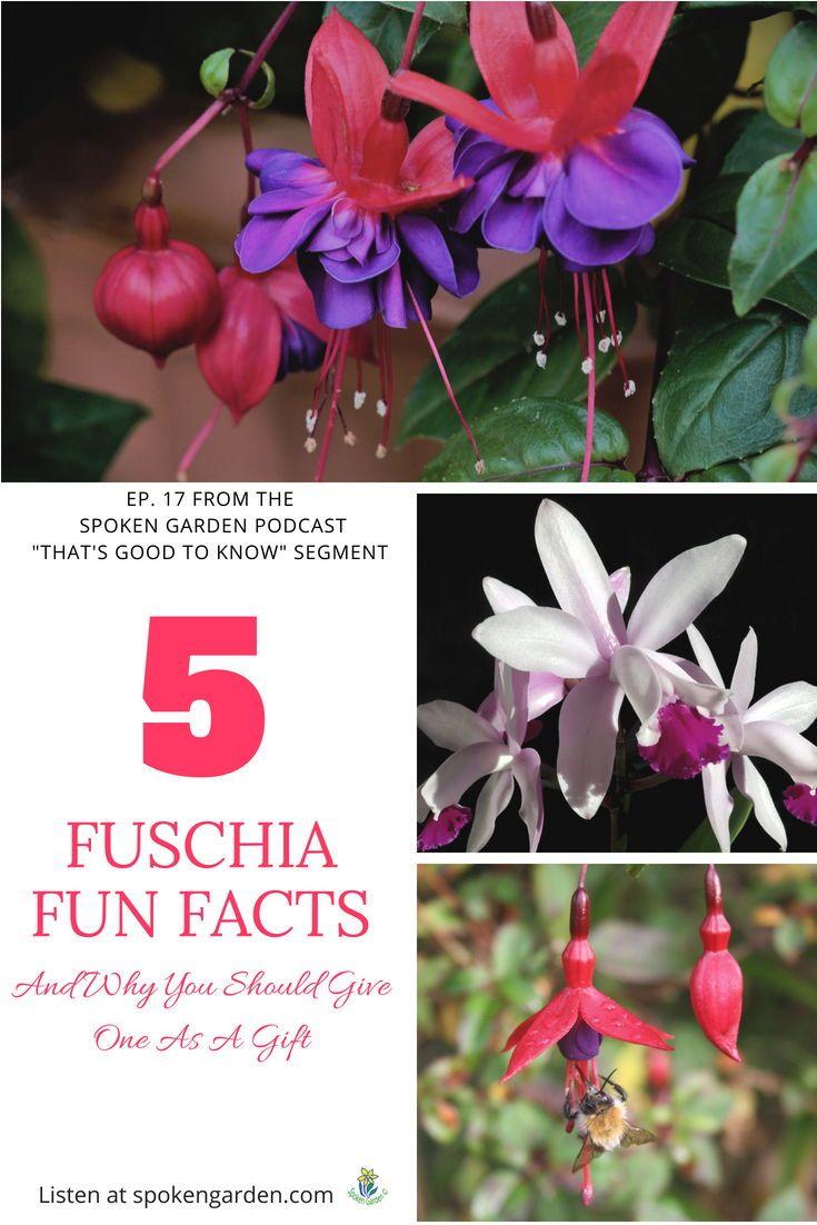 Ep17 Best Pest Prevention Strategies For Your Garden Fuchsia Plant Organic Gardening Magazine Home Grown Vegetables