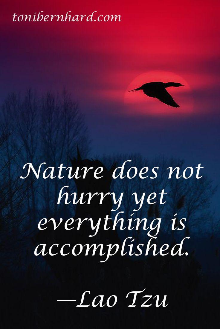 Lao Tzu Quotes Life 73 Best Lao Tzu  Quotes Images On Pinterest  Lao Tzu Quotes