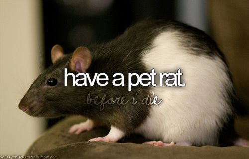 <3 Toad Bowen ...yes my sons rats name is Toad