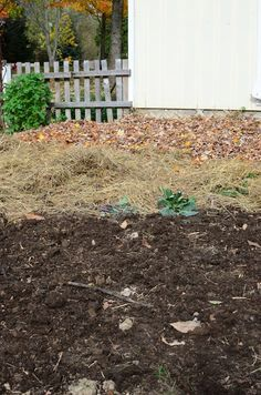 Does Back to Eden wood chip mulch gardening really work? Why wood chip mulch might not really be the best solution in the long run.