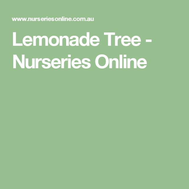 Lemonade Tree - Nurseries Online