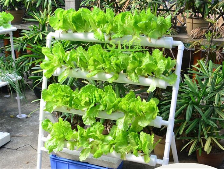Best 25 nft hydroponics ideas on pinterest hydroponics for Indoor gardening nutrients