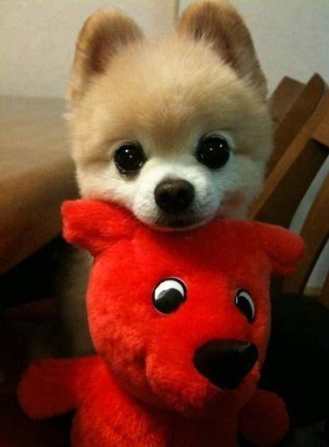 강아지 인형 - Google 검색