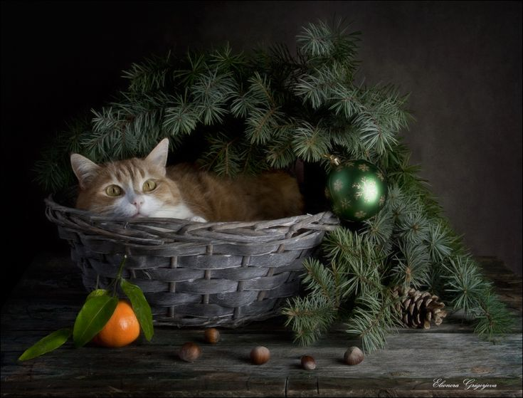 А я тут подожду. Вдруг он подарки перепутает.... Автор: Eleonora Grigorjeva