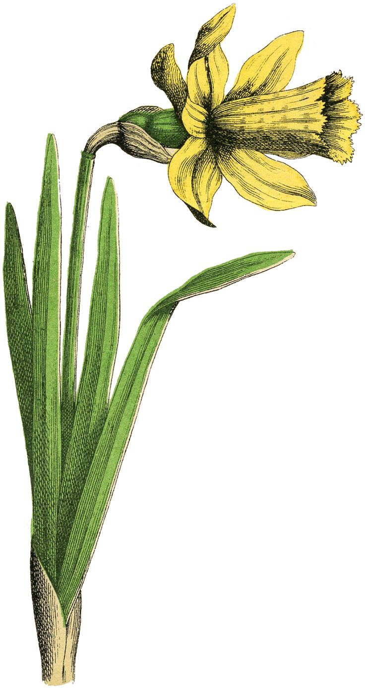 best flowers images on pinterest botanical tattoo blossom