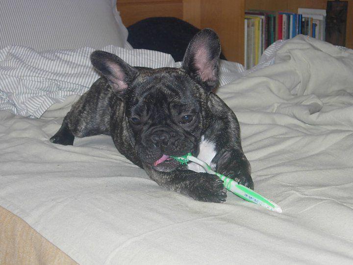 Ettore ci tiene all'igiene dei suoi denti...fortse per mordere meglio le sue veterinarie ;-)