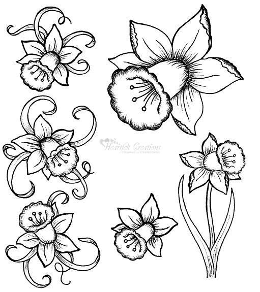 daffodil drawing - Google Search