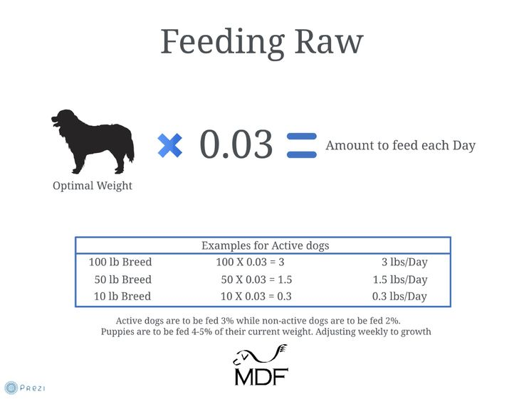 A short Prezi on how to feed the right amount of raw