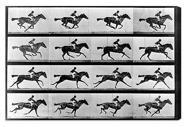horse in motion essay Learn how edward muybridge made his first successful serial photographs of fast  motion, using  in an excerpt from an anonymously published essay, he wrote.