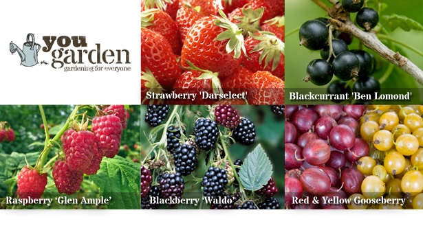 Enjoy the best British summer fruits picked straight from your garden – five fabulous soft fruit varieties to grow at home. Feast on fresh strawberries, raspberries, blackcurrants, gooseberries & blackberries and save 68%.