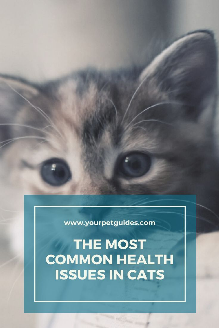 Common Cat Health Issues In 2020 Cat Health Cat Health Problems Kitten Health