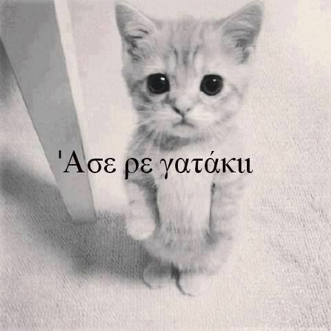 άαασε ρε γατάκι..!!