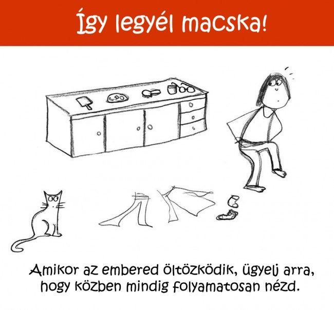1725 Így legyél macska!   Tippek és ötletek kezdő cicusoknak