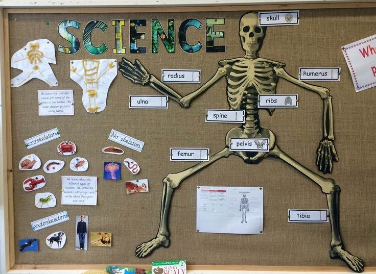 7 best images about science on pinterest | poster, mouths and, Skeleton