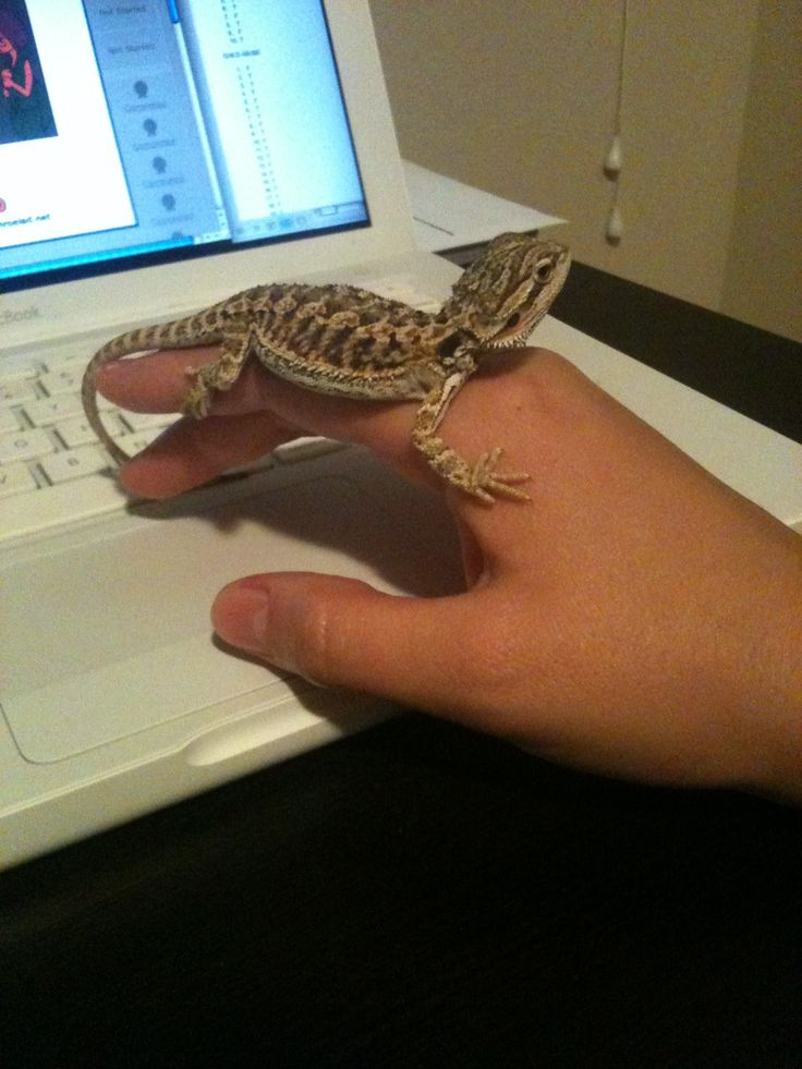 1000 Ideas About Bearded Dragon Cage On Pinterest