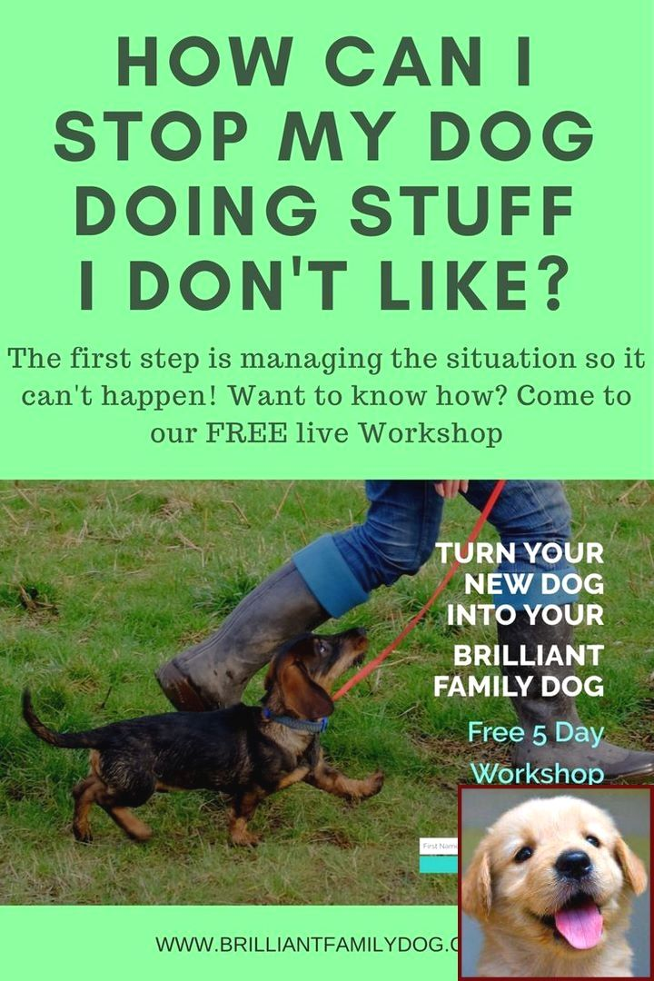 House Training A Puppy When You Work And Clicker Training For Dogs