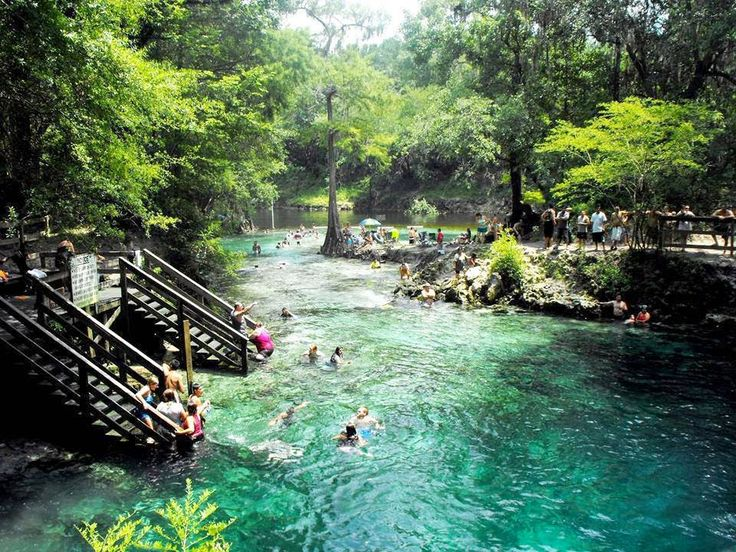 North America's 7 Best (and Secret) Swimming Holes Lafayette Blue Springs State Park - Florida, USA