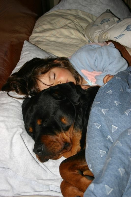 Rottweilers make the best snugglers...when they let you on the bed