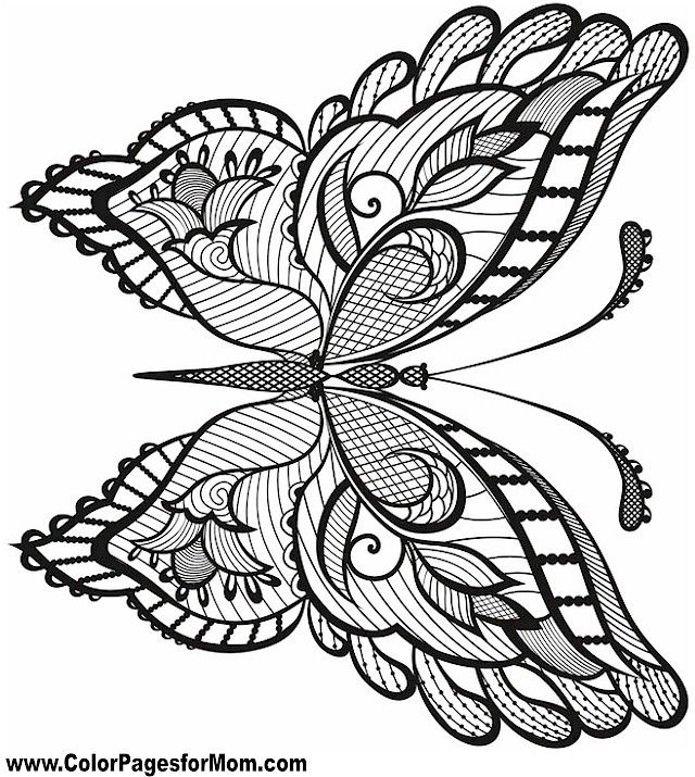 Butterfly Coloring Page 38 Zentangle