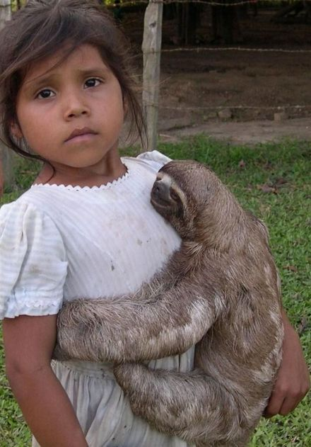 Best Sloths Images On Pinterest Baby Sloth Sloths And - 5 month old baby and sloth are the most unlikely of best friends