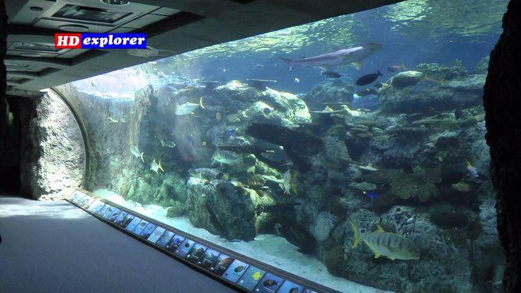 Aquarium of the Pacific (Long Beach - California)