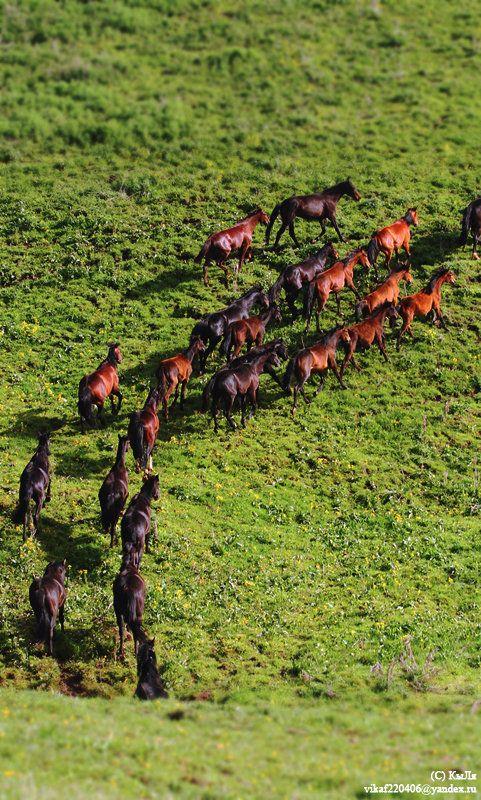 A magnificent herd