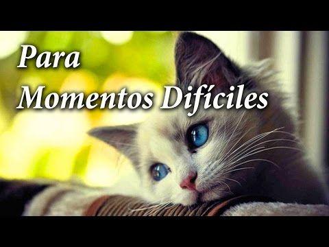 IMAGENES DE GATITOS CON FRASES DE AMOR | #frasesdeamor - YouTube