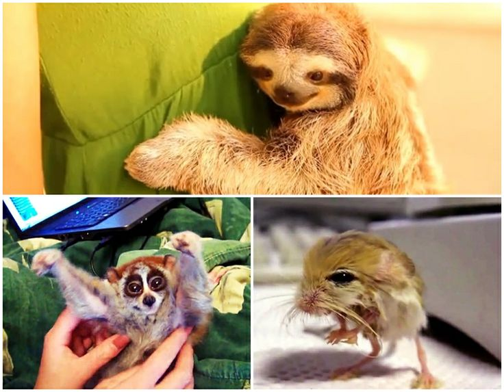 Funny and Weird Looking Animals