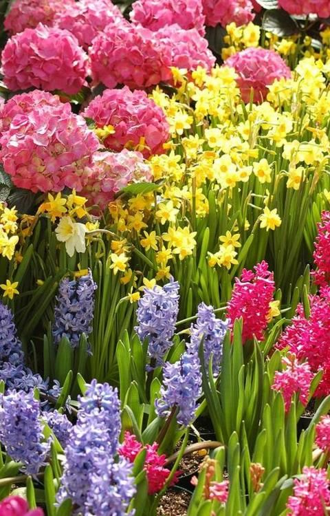 beautiful flower garden: Flowers Gardens, Spring Flowers, Spring Seasons, Spring Colors, Front Yard, Vibrant Colors, Flowers Beds, Beautiful Flowers, Colors Flowers