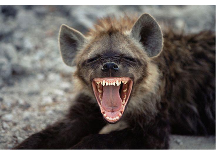 Funniest animals  Anim...