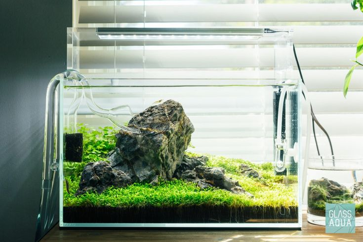 Guide To Planted Aquarium Aquascaping - Iwagumi - Glass ...