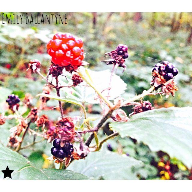 Berries in the woods       #madewithstudio