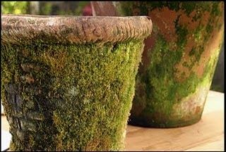 I love the look of English Country Cottage, and with that comes pots covered in wonderful green moss. Create your own mossy pots easily, ju...